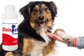 DisinPet: detergente e igienizzante spray per le zampe dei tuoi animali.